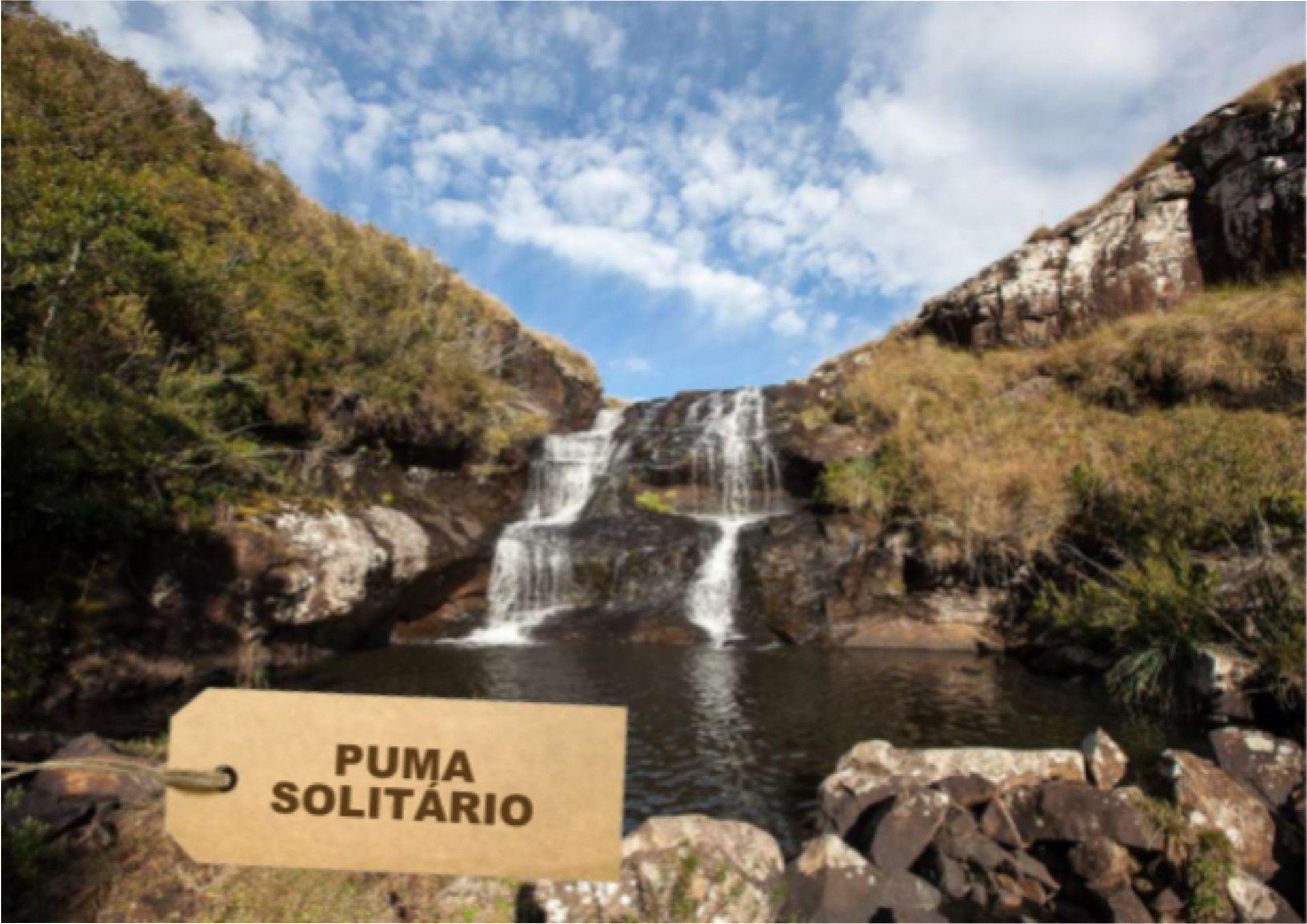 Puma Solitário